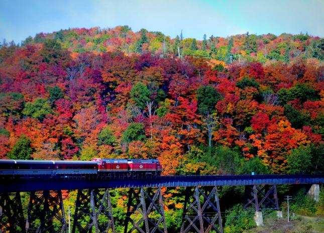 Autumn trainway