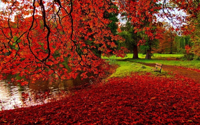 autumn-in-red
